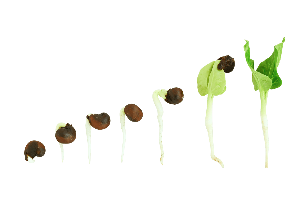 7 Day Sprouts - WELL NATURE Skin Care