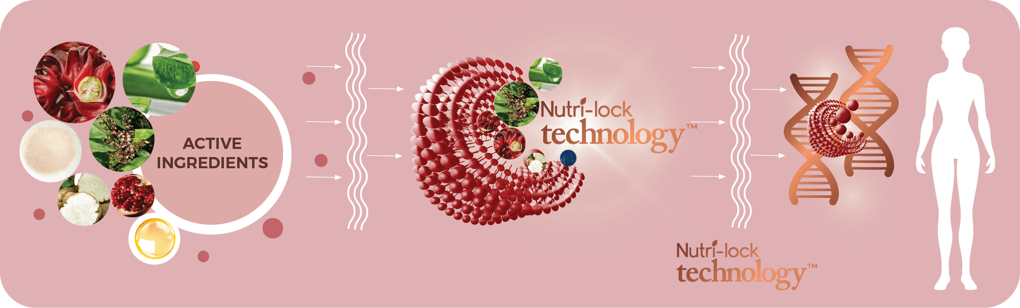 Nutri Lock
