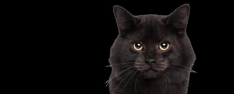 wonderlab catz eyebrow pen cat