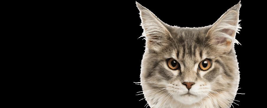 wonderlab catz eyeliner cat