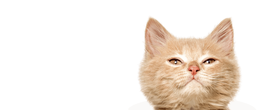 wonderlab catz eyeshadow cat