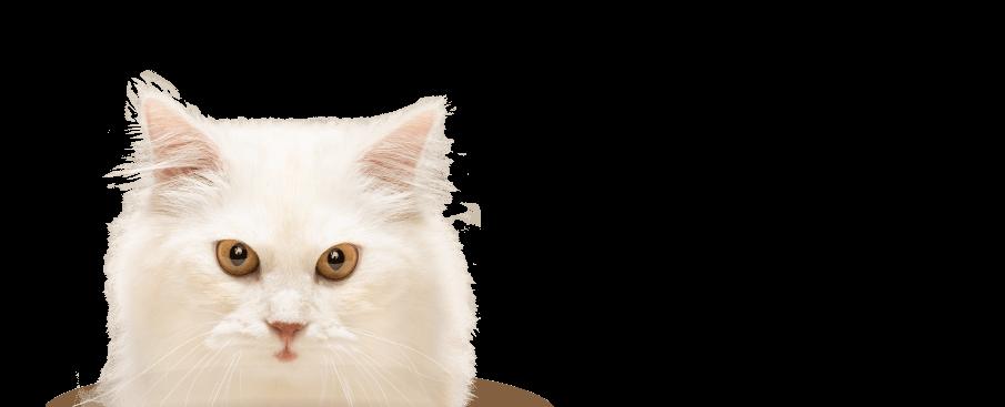 wonderlab catz o2 cushion cat